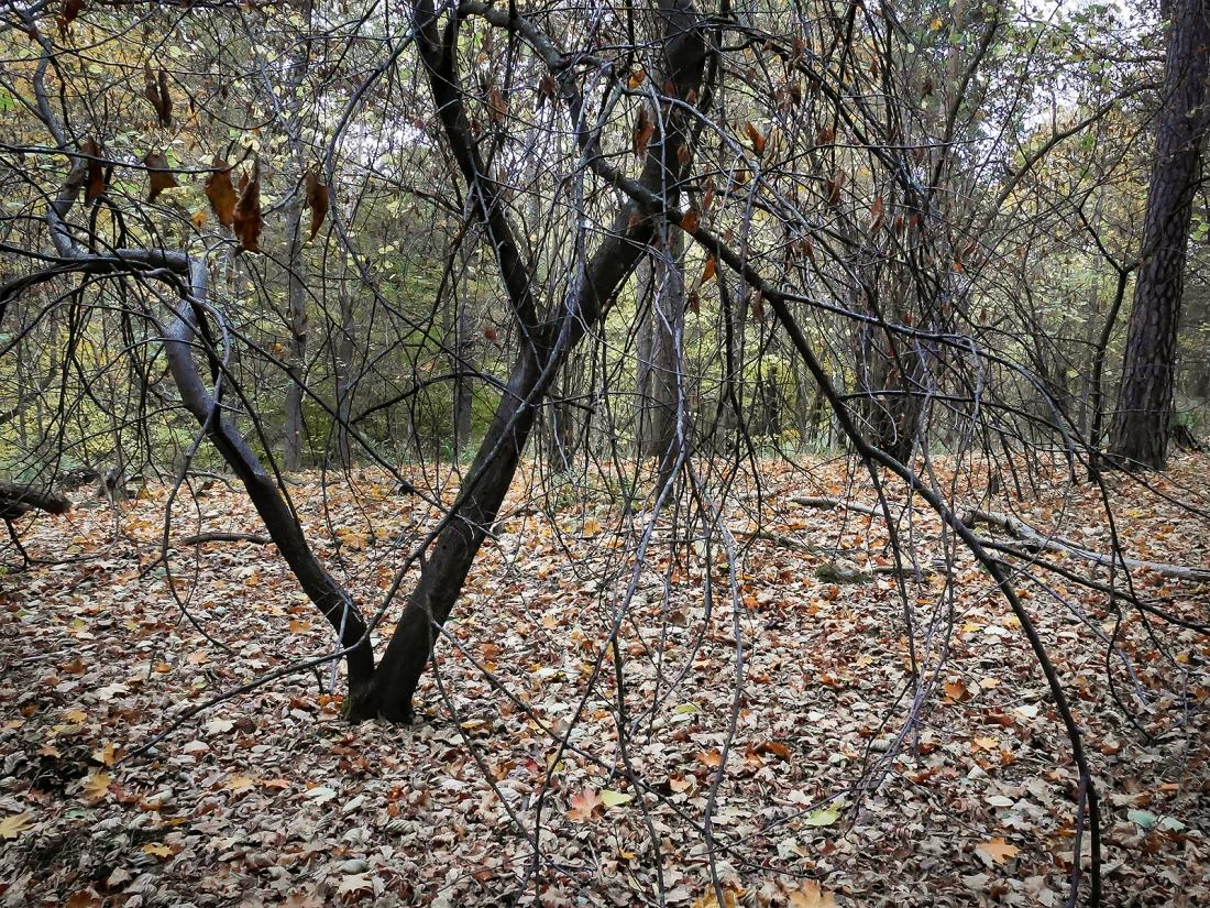 20161016_4797-1_forest-utvald-1